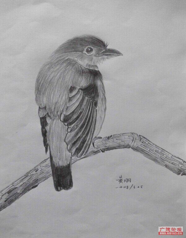 铅笔画个鸟